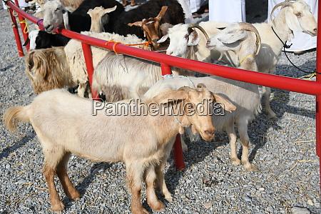 coronavirus china sars tiermarkt viehmarkt ausbruch