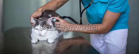 kranke katze wird von einem tierarzt