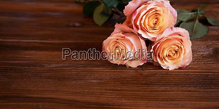 rosa rosen fuer den muttertag