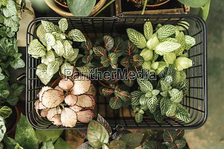 topfpflanzen im warenkorb