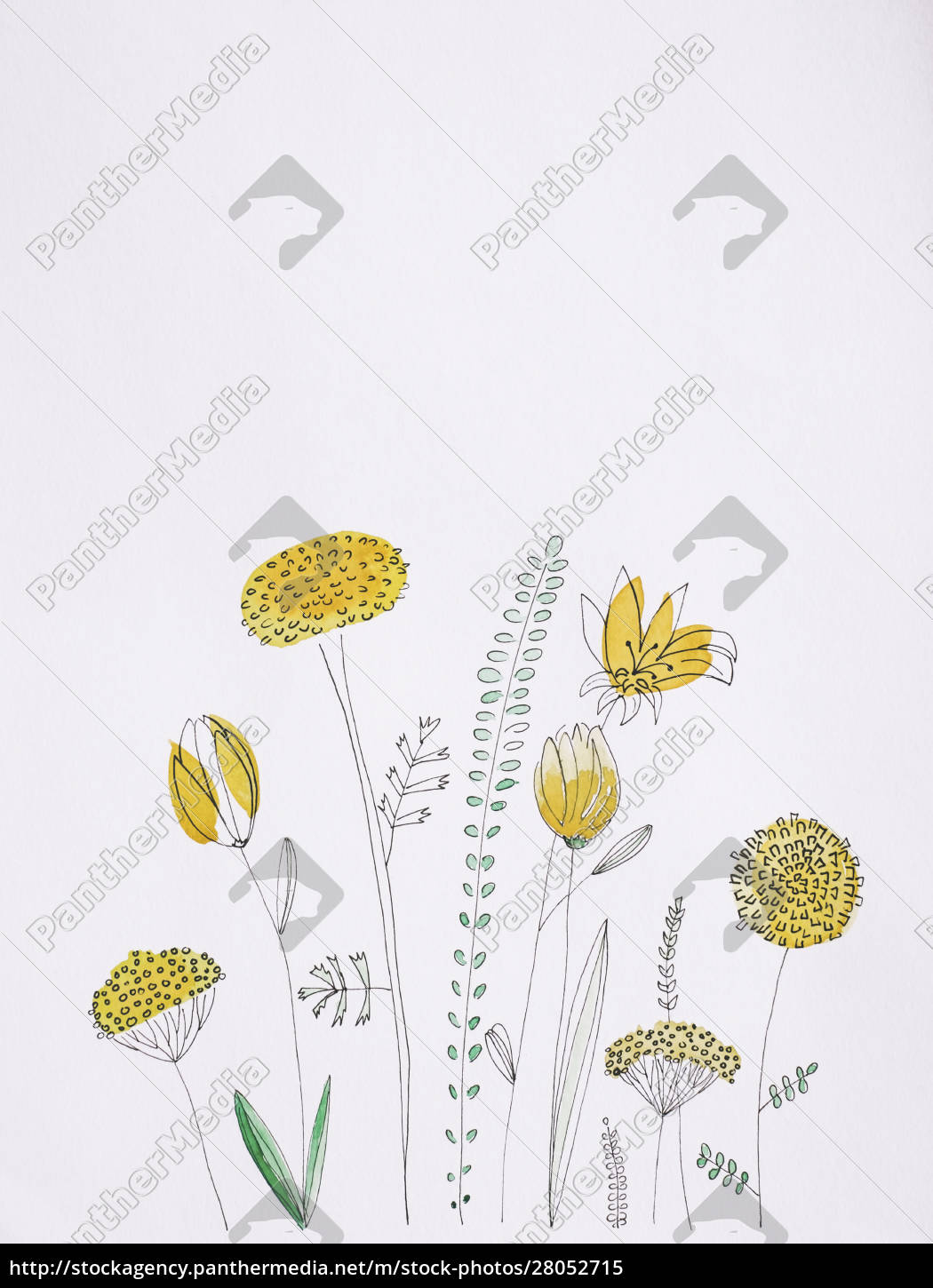 yellow, flowers, watercolor, painting, on, white - 28052715