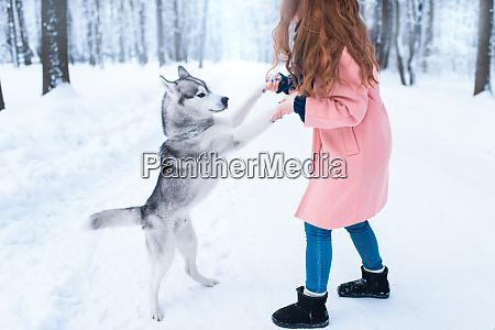 huebsche frau mit verspielten husky hund