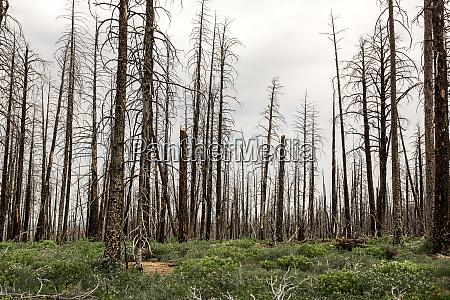 totholz OEkologie umwelt landschaft