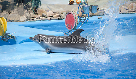 verspielter delphin