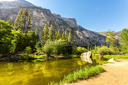 clear water and evergreen pine forest