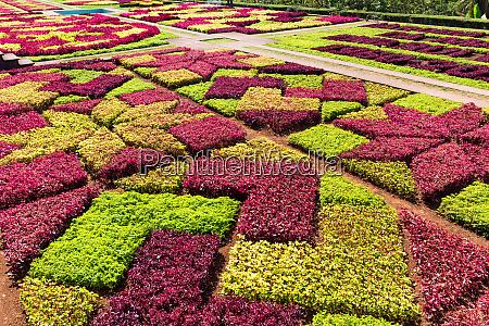 bright flower bed