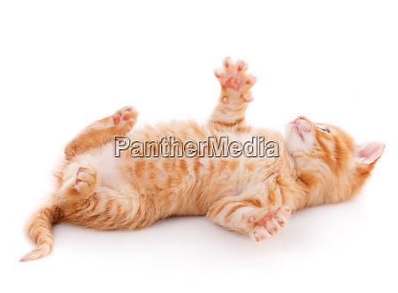 suesse verspielte kaetzchen katze isoliert auf