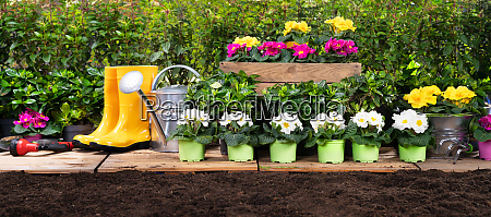 gardening tools set and flowers