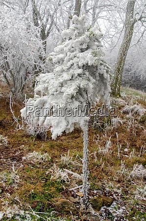 romantische winterlandschaft im januar