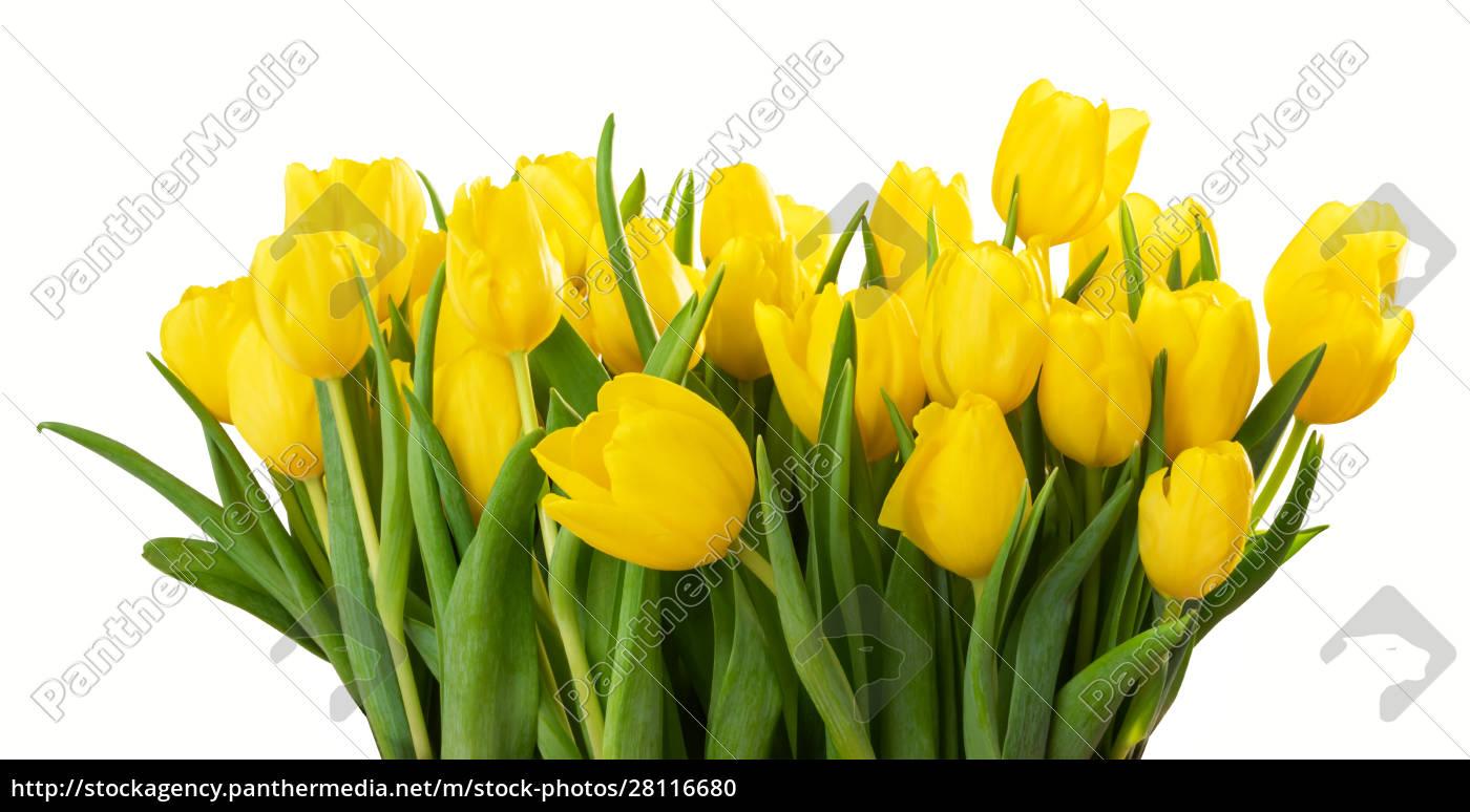 ein, großer, blumenstrauß, aus, gelben, tulpen - 28116680