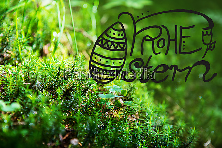 green fir branches grass calligraphy frohe