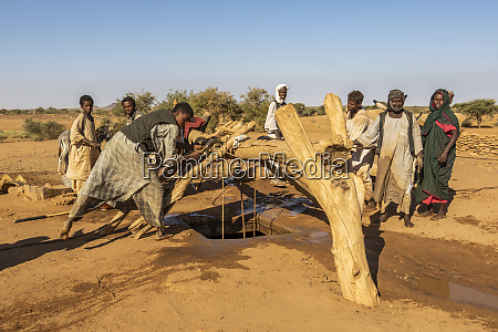 nomads and their animals getting water