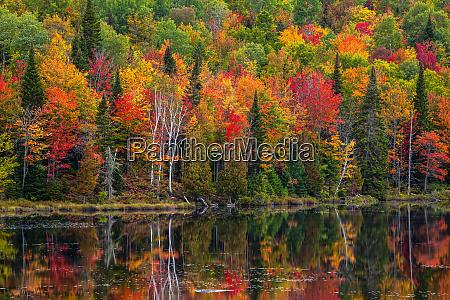 vibrant autumn coloured foliage in a