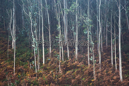 blaetter wachsen auf saemigenbaeumen in waeldern