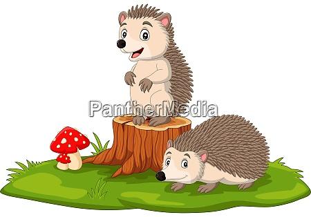 cartoon two baby hedgehog on tree