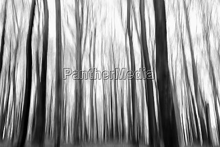 buchenbaum wald im winter verschwommen durch