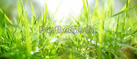 fruehlingswiese mit hellem bokeh