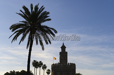torre del oro by palm trees