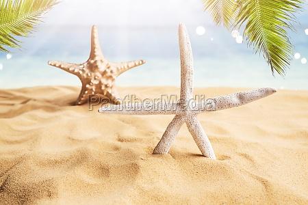 sternfisch am sandstrand