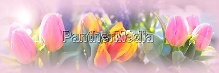 rosa tulpen stillleben
