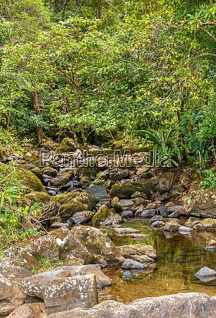 primaerer regenwalddschungel madagaskar