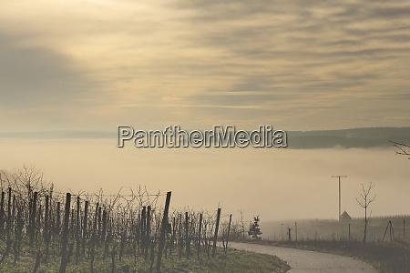 weinberg mit nebel im tal in