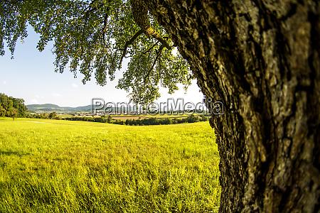 landschaft mit wiese baum und blick