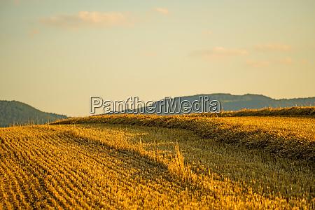 stoppelfeld mit stroh und panoramablick auf