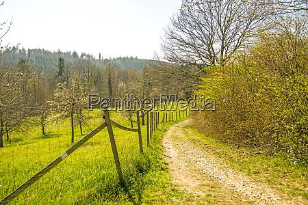 landschaft mit weg wiese baeumen straeuchern