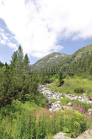 landscape in the pirin national park