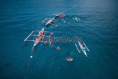 luftaufnahme von oslob whale shark watching