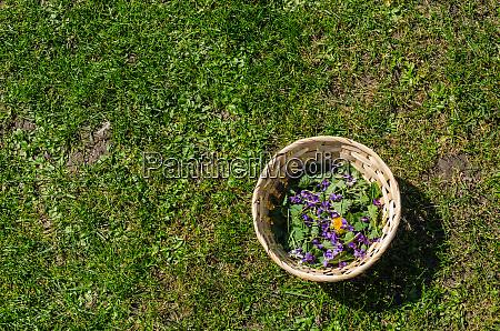 fruehlingsblumen in einem korb auf gras