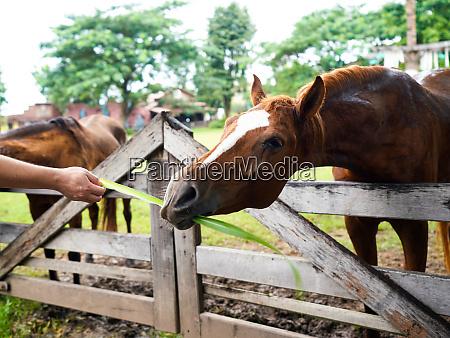 geben sie gras an gesunde pferde