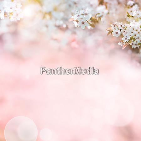 rosa muetter tag hintergrund