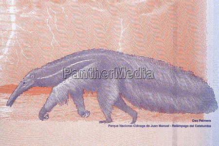 riesen anteater ein portraet aus venezolanischem