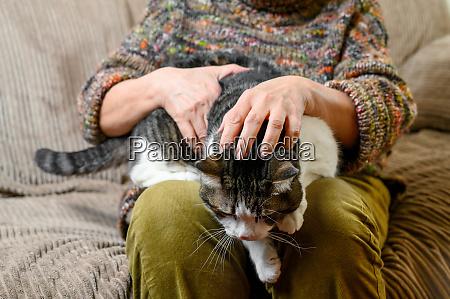 unkenntlich alte frau streicheln einer katze