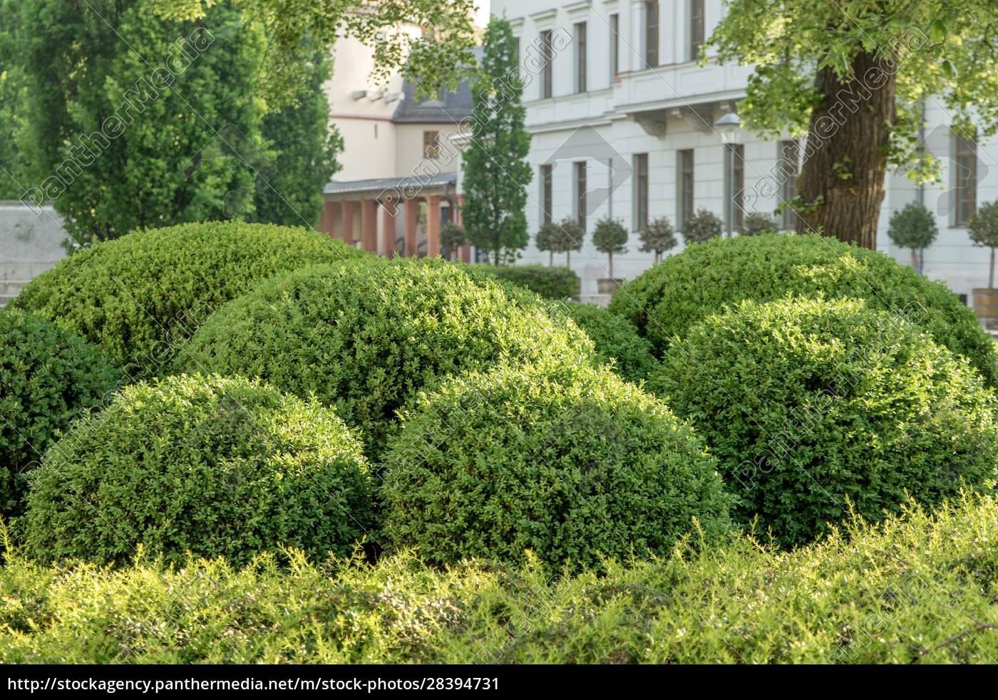 geformte, buchsbaumkugeln - 28394731