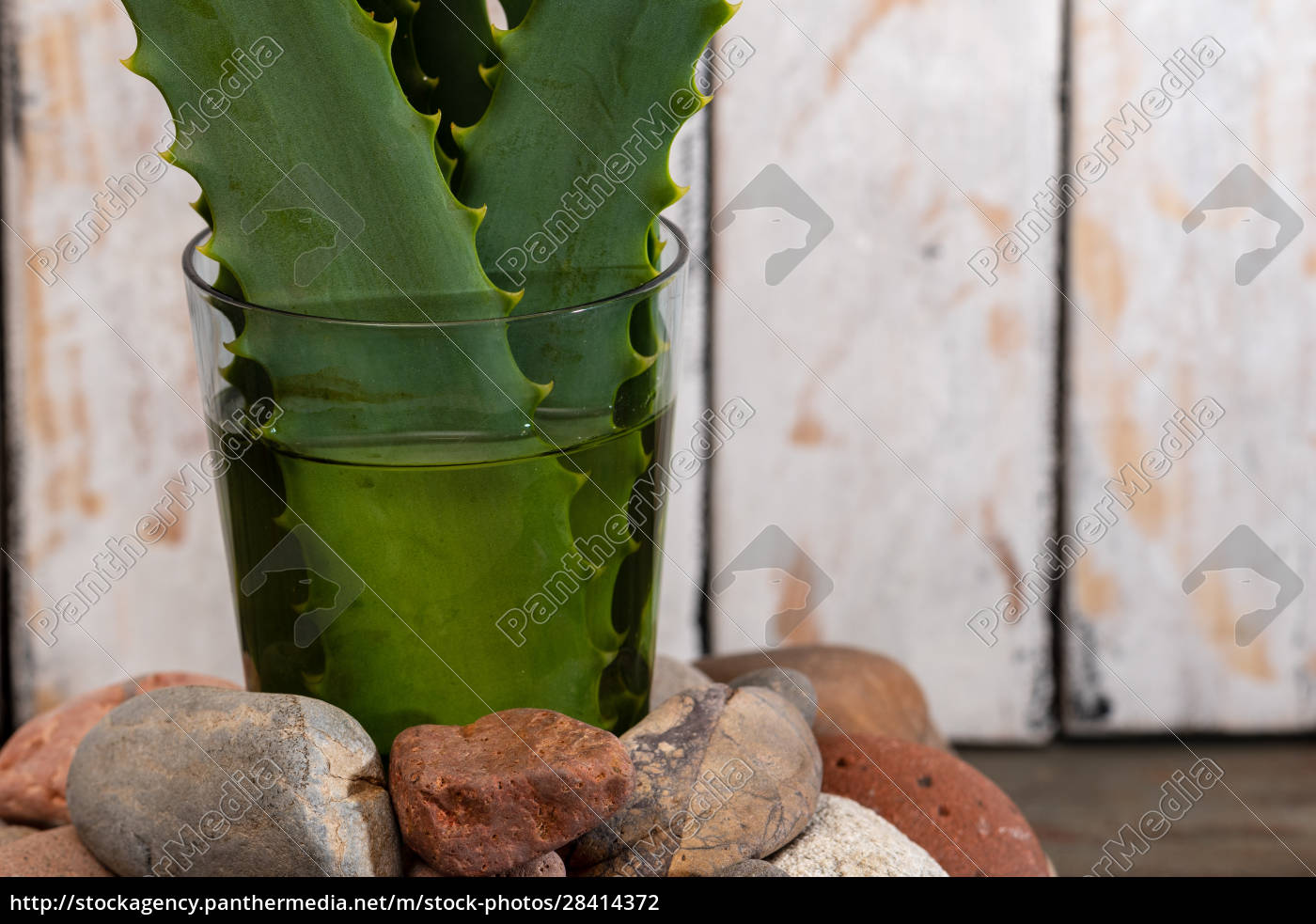 prickly, pears, and, succulents, in, small - 28414372