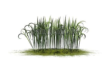 fantasy grass auf einer gruenflaeche