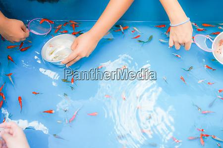 bild von goldfischen rettung der messe