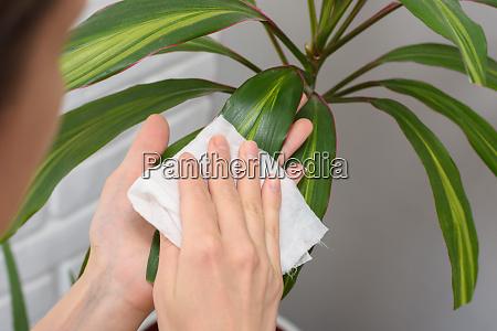girl wipes dust from long stemmed
