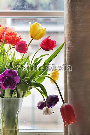 multicolored tulips in a vase
