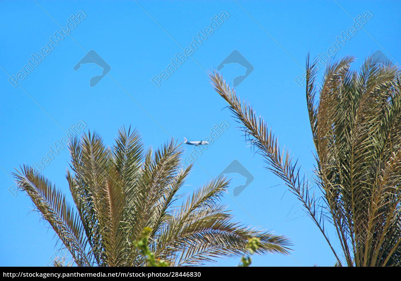 flugzeug, das, hoch, in, den, himmel, fliegt. - 28446830