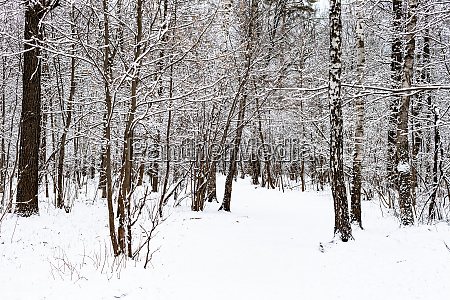 schneebedeckter fussweg im verschneiten wald im