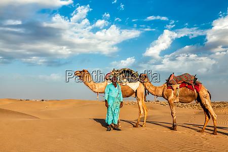 kamel kameltreiber mit kamelen in rajasthan