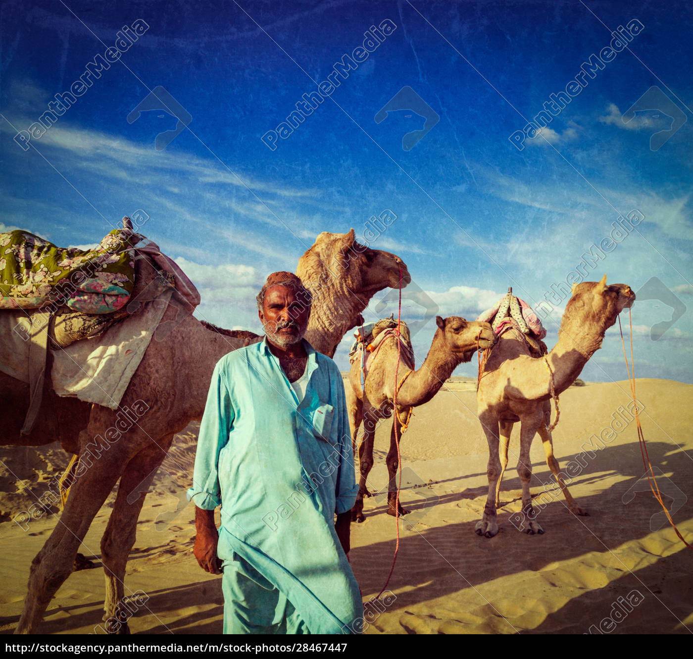 cameleer, (camel, driver), with, camels, in - 28467447