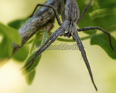 one, grey, spider, sits, on, a - 28467123