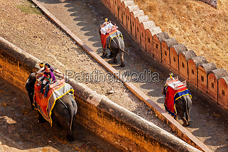 touristen reiten elefanten auf dem aufstieg