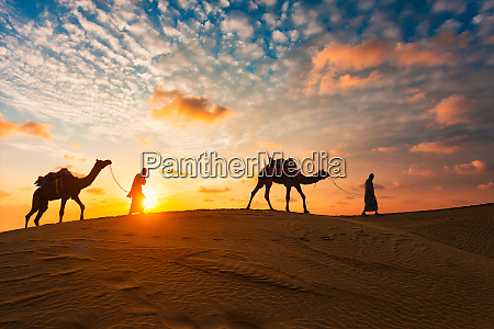 indian, cameleers, camel, driver, with, camel - 28470709