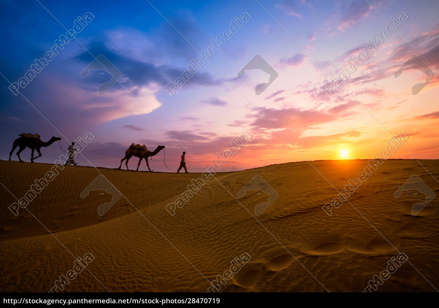 indian, cameleers, camel, driver, with, camel - 28470719